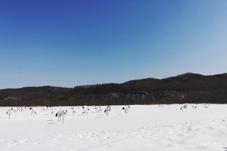阿寒國際丹頂鶴中心3