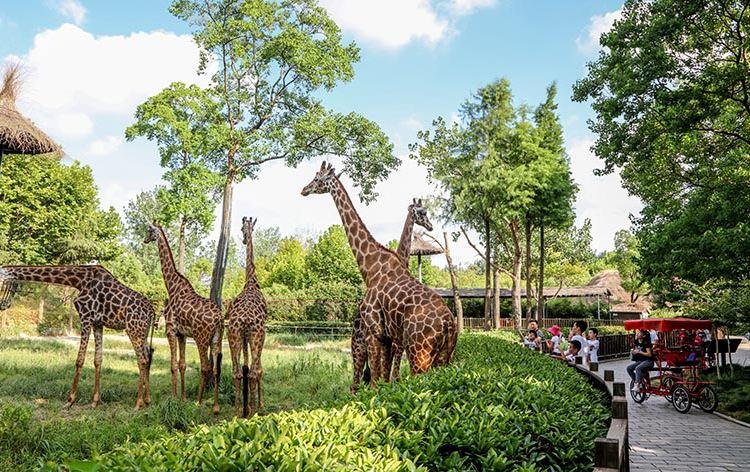 Shanghai Wild Animal Park2