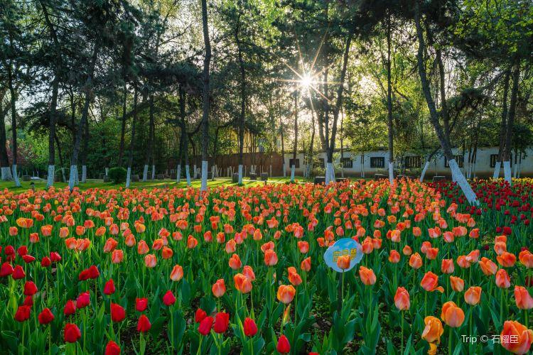 Baoji People's Park3
