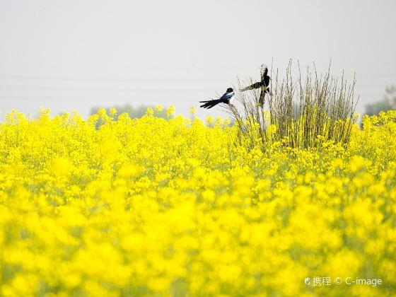 Qianduo (Raised Wetland Fields) Scenic Area