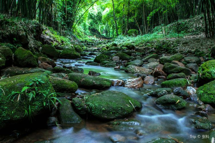 대나무 협곡 풍경명승구(진지계곡)1