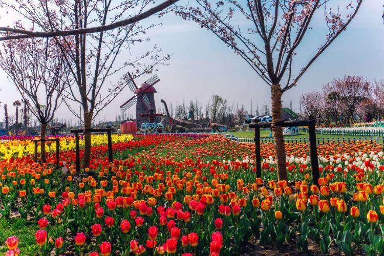 윈란만 꽃밭경관 공원2