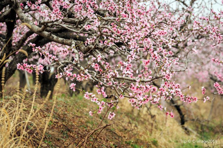 Shiwai Taoyuan2
