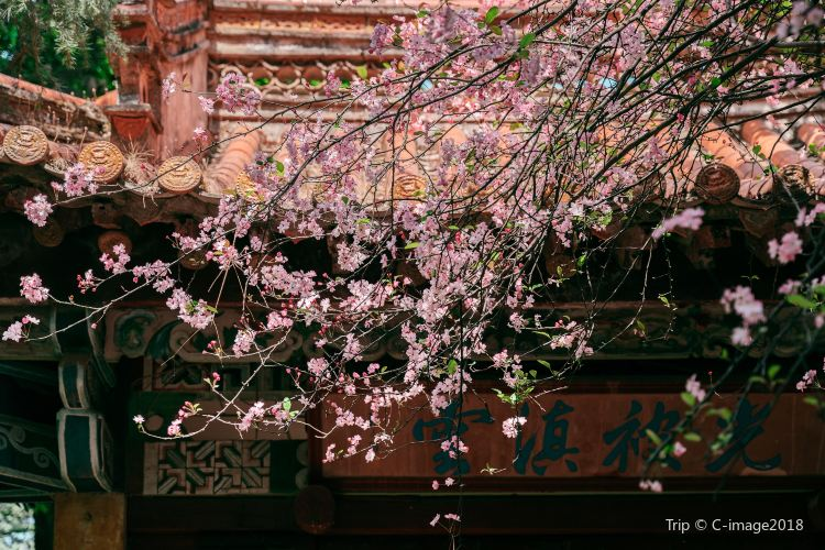 Tanhua Temple Flowers2