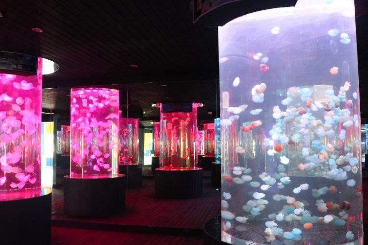 Hangzhou Changqiao Polar Ocean Park4