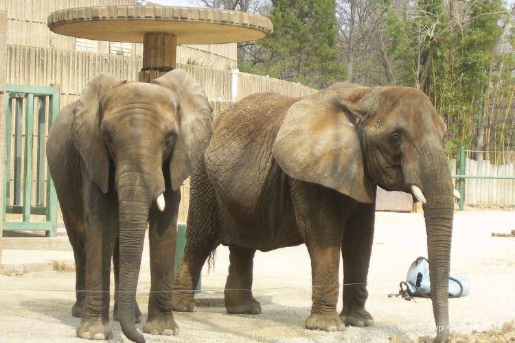 Memphis Zoo4