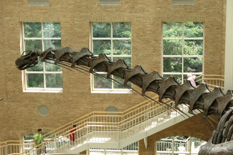 Fernbank Museum of Natural History1