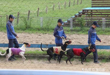Shanghai Wild Animal Park Dog Racetrack