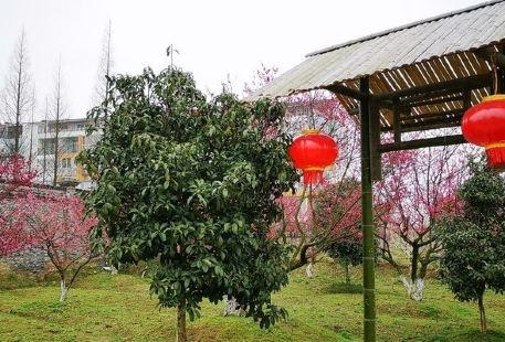 Xiaokangmei Garden