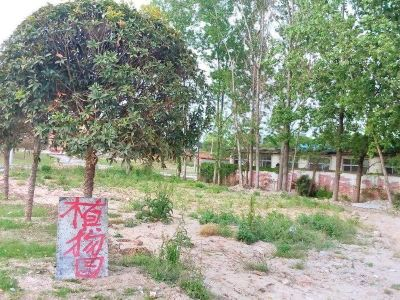 Shannanzhenxi Botanical Garden