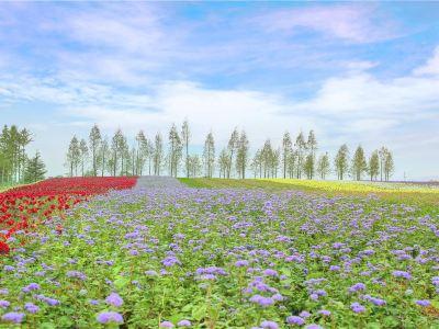 Fure Flower Manor