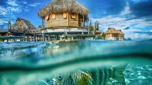 土阿莫土群島