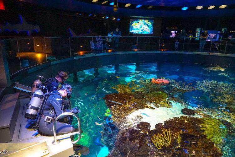 新英格蘭水族館4