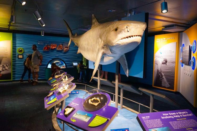 新英格蘭水族館3