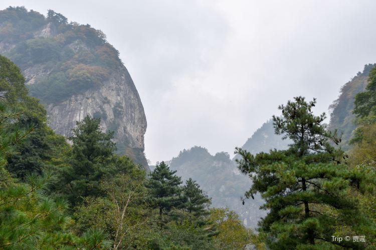 朱雀国家森林公園1