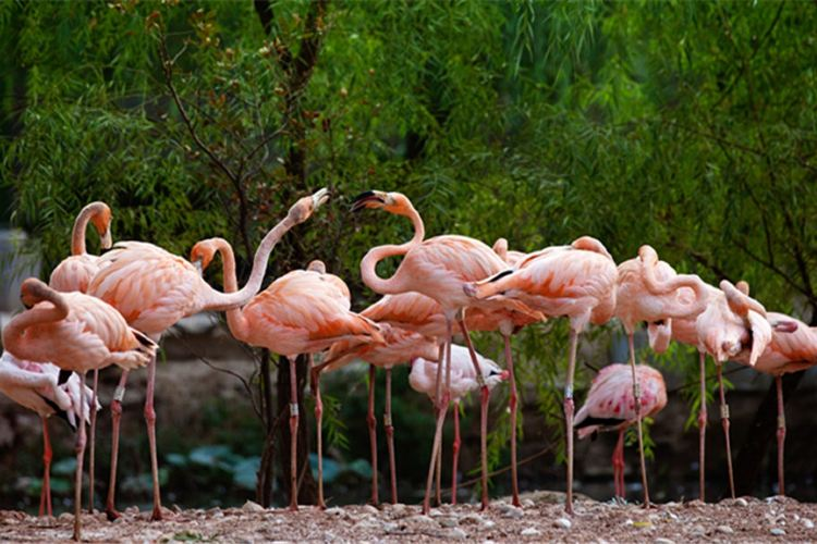 정저우 동물원2