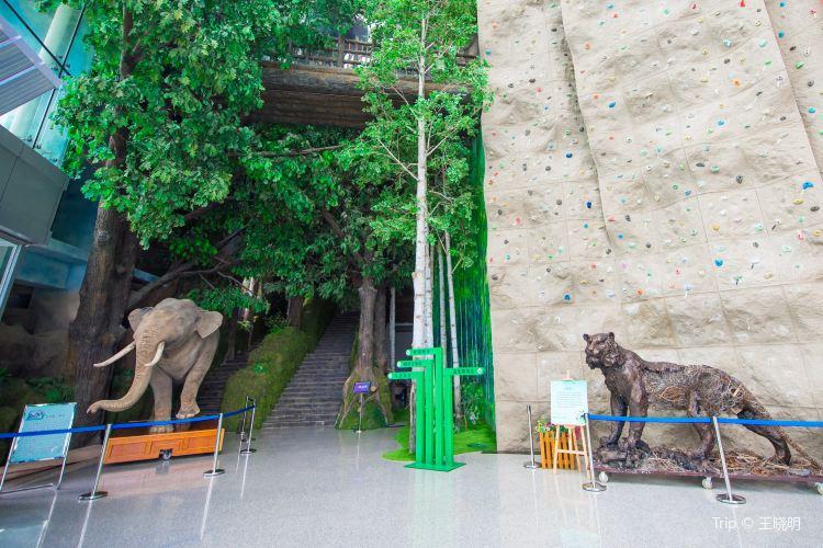 吉林省自然博物館3