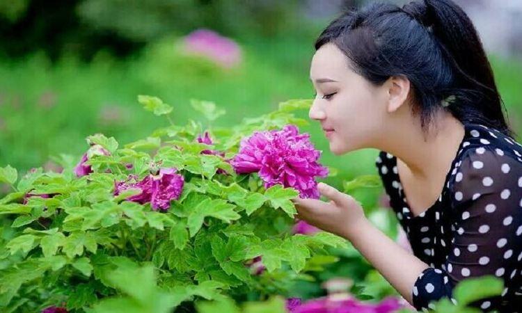 Pengcheng Thousand-flower Valley4