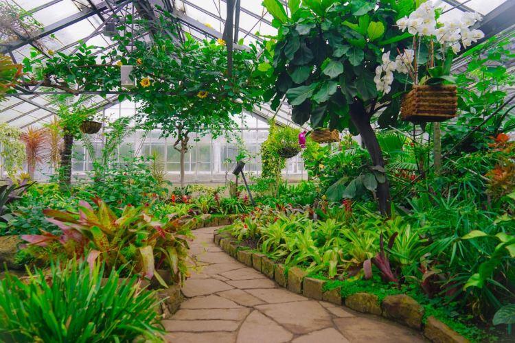愛倫溫室花園4
