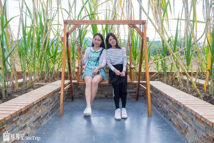 Wucai Tuanyuan Farmers Festival3