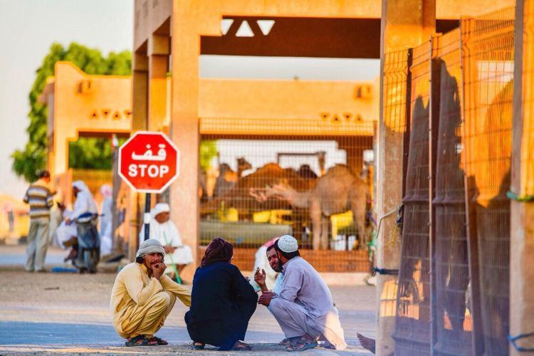 Al Ain Camel Market4