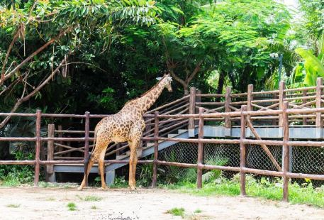 Caise Zoo