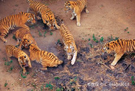 Shenzhen Safari Park