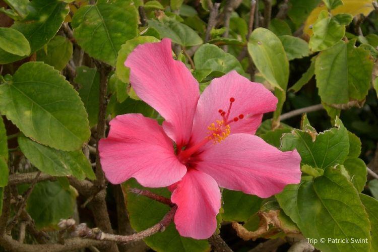 Hydroflora Gardens1