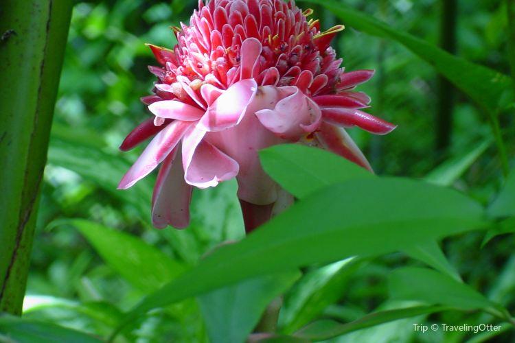 Flower Forest2