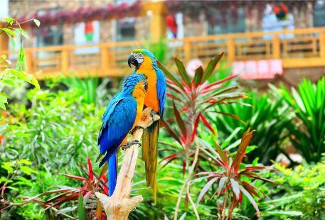 Nangong Wuzhou Botanical Amusement Park
