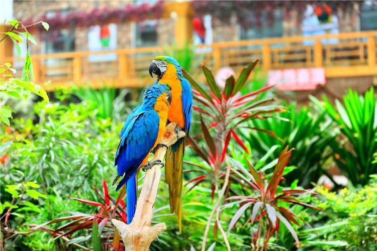 南宮五洲植物樂園