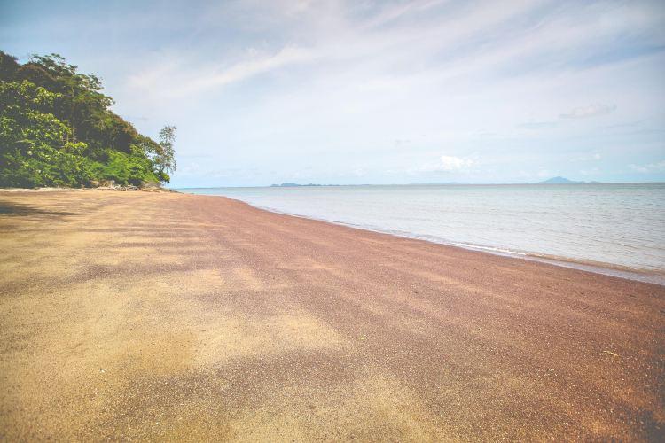 化石貝殼海灘
