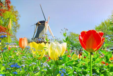 Keukenhof Holland