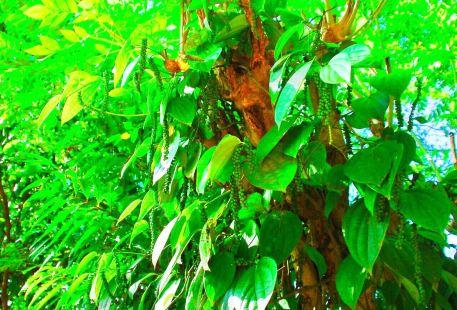 艾拉香料花園
