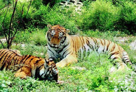 타이위안 동물원