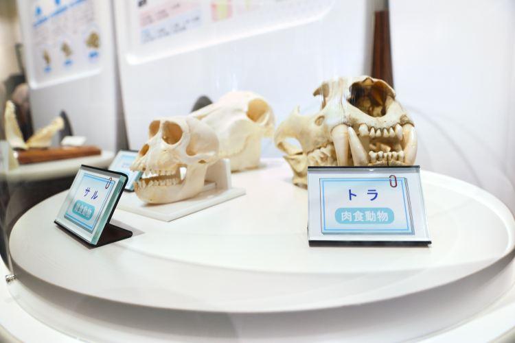 牙齒博物館