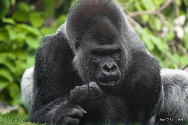 링컨파크 동물원1