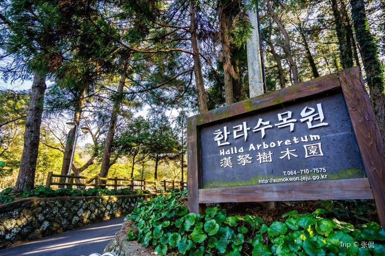 Halla Arboretum3