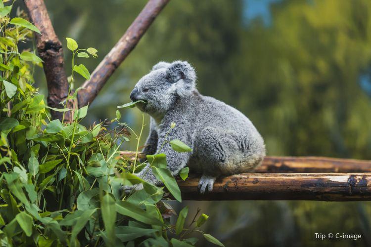 可倫賓野生動物保護區1