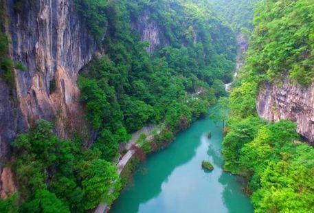 Zhongya Nanmu Lin Sceneic Area