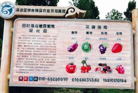 Haizhou Huilin Vineyard
