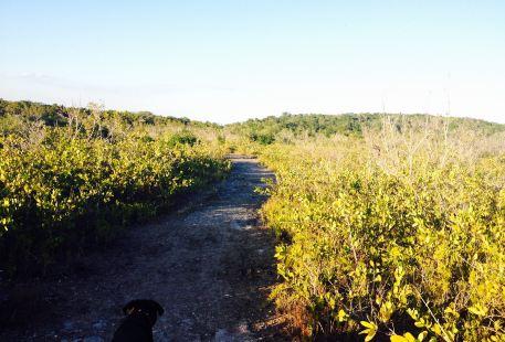 Key Largo Hammocks State Botanical Site