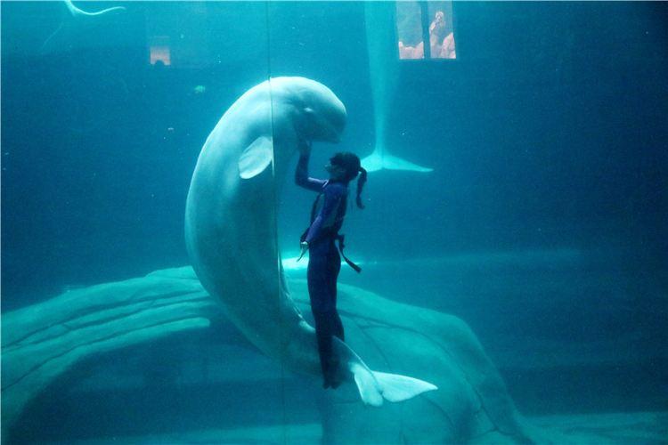 Hangzhou Changqiao Polar Ocean Park2