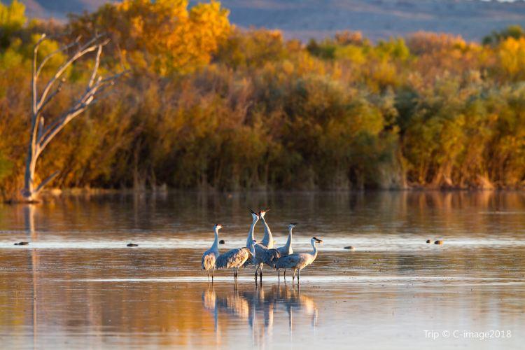 보스케 델 아파치 동물보호구역2