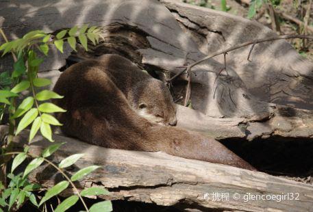 Touroparc Zoo