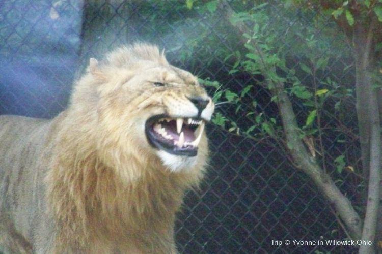 Akron Zoo1