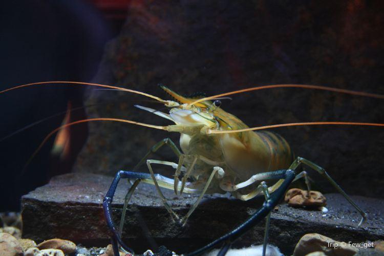 Oklahoma Aquarium1