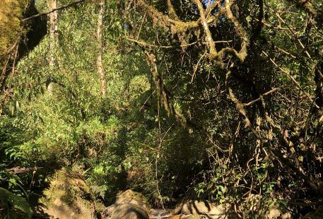 Ailaoshan Forest Tourist Area