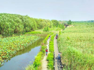 Chongming Island National Geopark