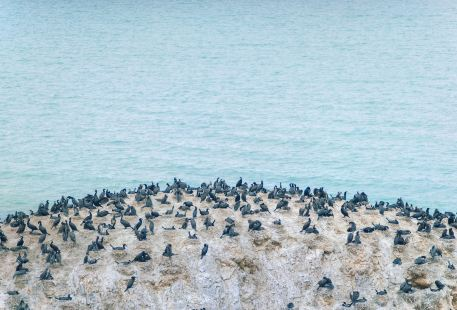 Bird Island of Qinghai Lake